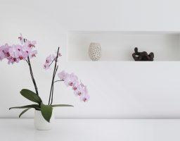 Orhideja – Trikovi za održavanje i cvjetanje